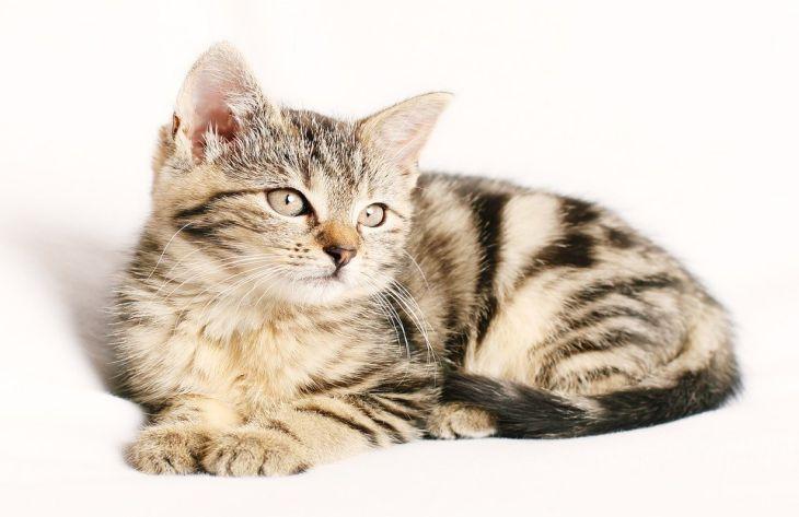 Ученые перечислили 8 причин завести кошку