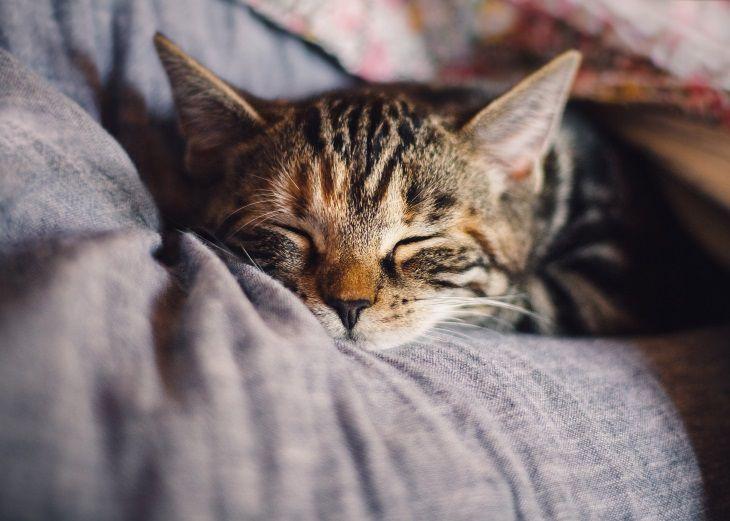 Спите с кошкой в кровати? Вот что вам нужно знать