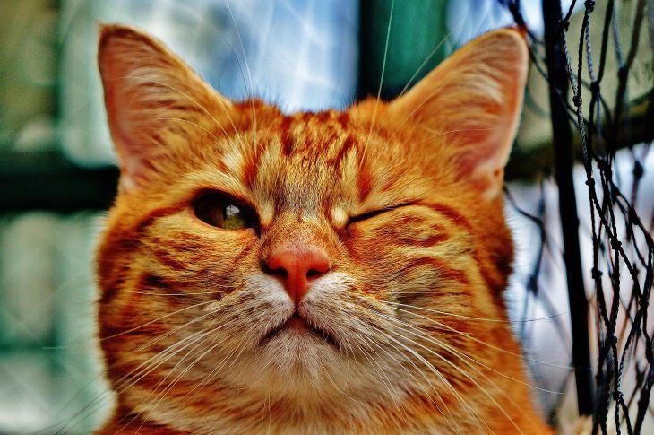 Как кошки заранее предчувствуют грозу: ответ экспертов