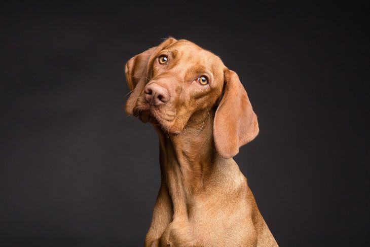 Найден надежный метод пересчета возраста собак в «человеческие годы»