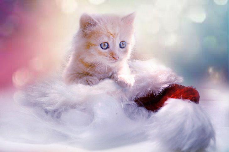 Какую кошку надо завести, чтобы привлечь в дом деньги, счастье и удачу