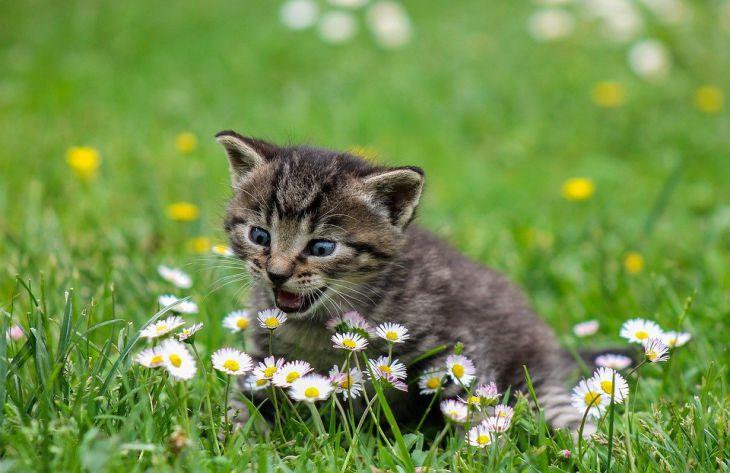 котенок, природа
