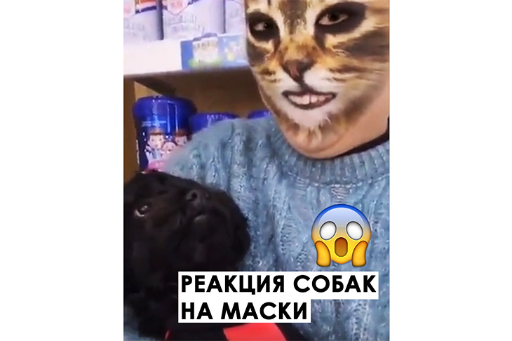 реакция собак на маски