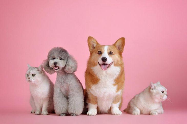 Ученые рассказали, как нас лечат домашние животные