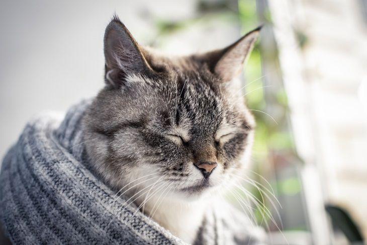 Эксперты рассказали, почему коты улыбаются