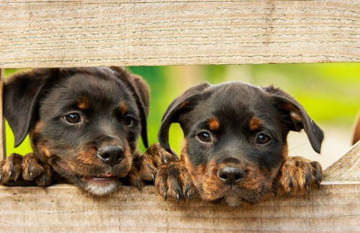 щенки, собаки