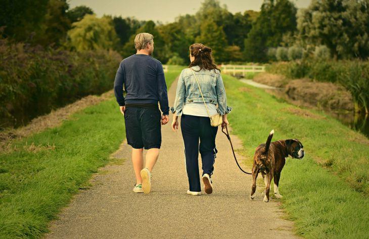 люди, собака, природа, прогулка