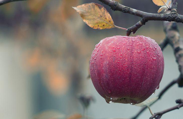 Онколог назвал фрукты, которые необходимо есть при раке