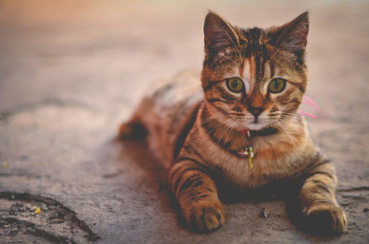 У кошек есть мимика – исследование