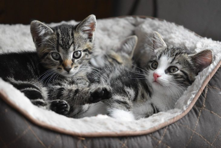 Что следует знать об иммунитете кошки зимой