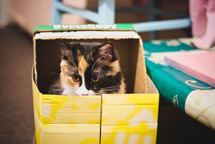 Выяснилось, почему все кошки на свете так страстно любят коробки