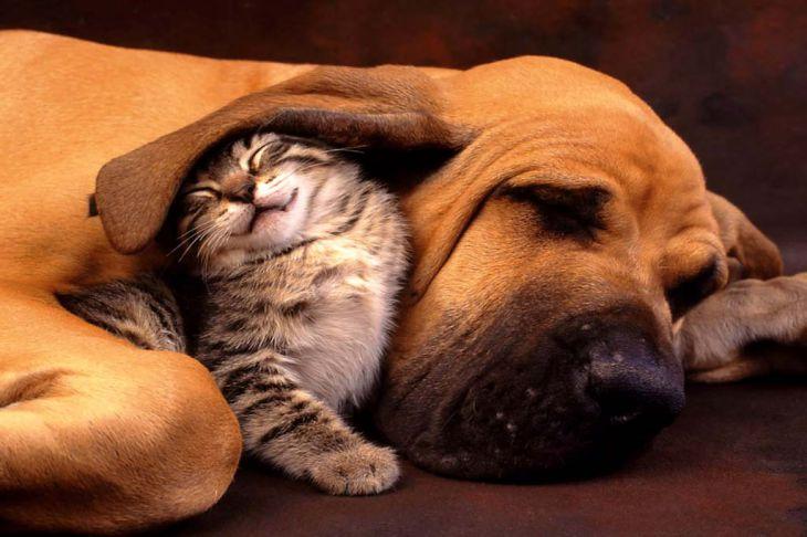 Вот почему нельзя целовать домашних животных