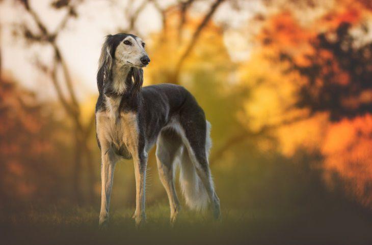 Не все собаки могут жить в квартире: названы породы