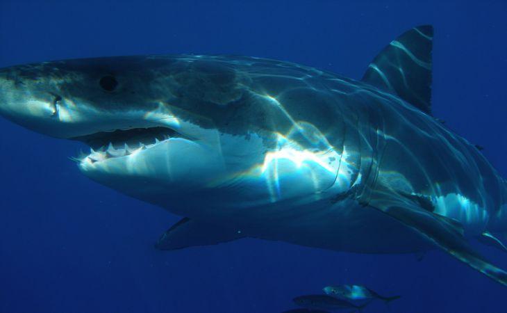 Бесследно пропавшего туриста нашли в желудке акулы