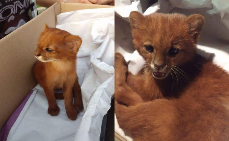 Девушка приютила бездомного котёнка и лишь у ветеринара узнала, кто он на самом деле
